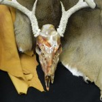 Deer Skull in Marble