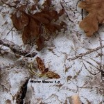 GH-049: Winter Mimicry