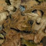 GH-052: True Leaf Camo