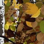 GH-059: Rocky Mtn Autumn Aspen