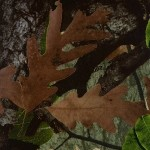 GH-063: Tru Woods Camo