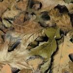 GH-064: Spring Leaf Camo
