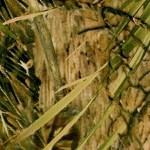 GH-070: Marsh Mimicry